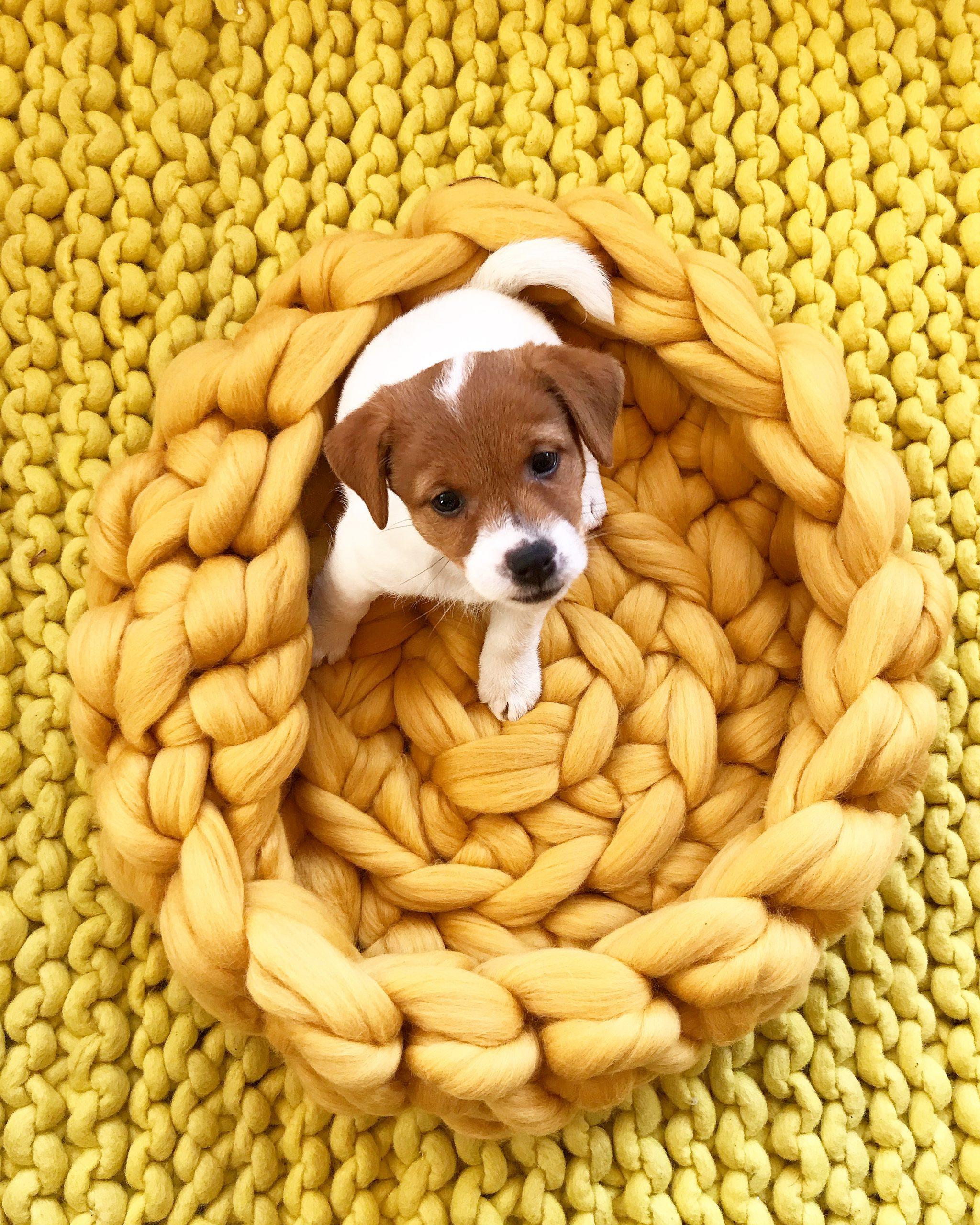 Elluyellow koiranpentu korissa keltainen