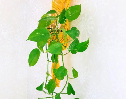 Elluyellow keltainen kotimainen käsityö
