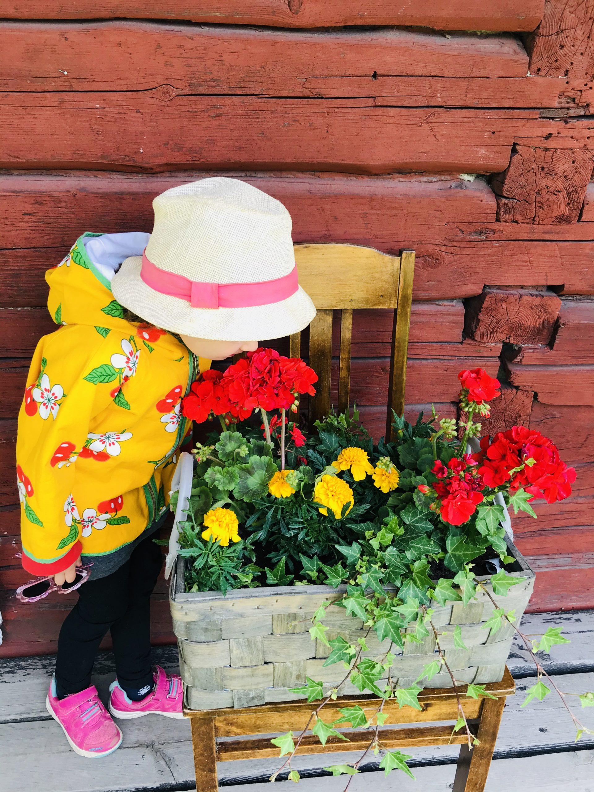 Elluyellow tytär Hinttalan kukkia haistelemassa.