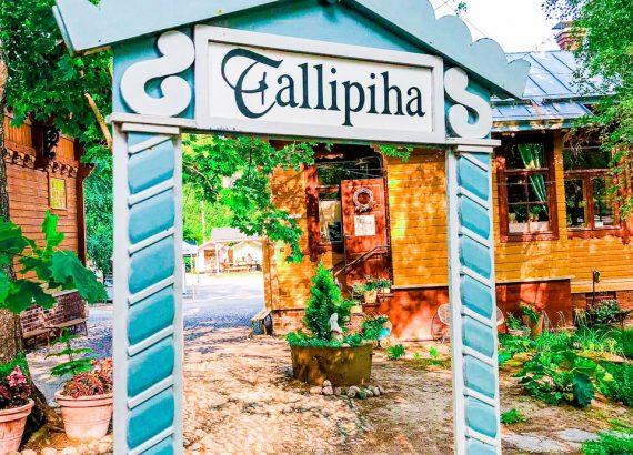 Elluyellow vierailemassa Tallipihalla
